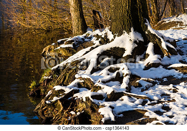 winter, wald - csp1364143