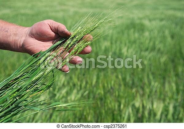 Winter Wheat Field - csp2375261