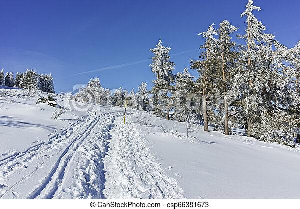 Winter wiew of Vitosha Mountain, Bulgaria - csp66381673