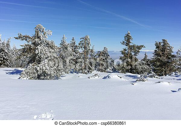 Winter wiew of Vitosha Mountain, Bulgaria - csp66380861