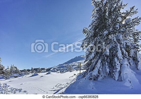 Winter wiew of Vitosha Mountain, Bulgaria - csp66380828
