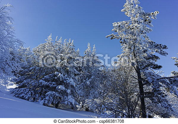 Winter wiew of Vitosha Mountain, Bulgaria - csp66381708