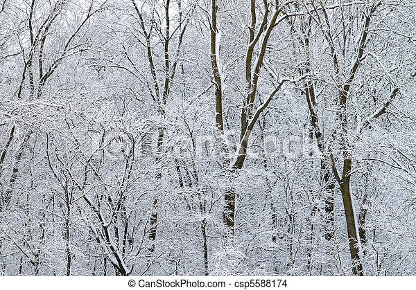 Winter Wonderland - Illinois - csp5588174