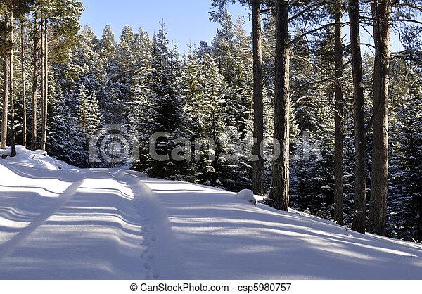 winterlandscape - csp5980757