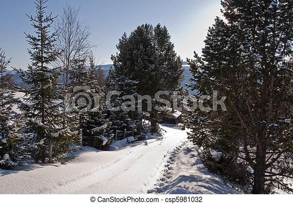 winterlandscape - csp5981032