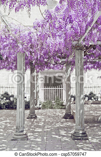 Wisteria Flower Arch With White Column Spring Purple Park Natural