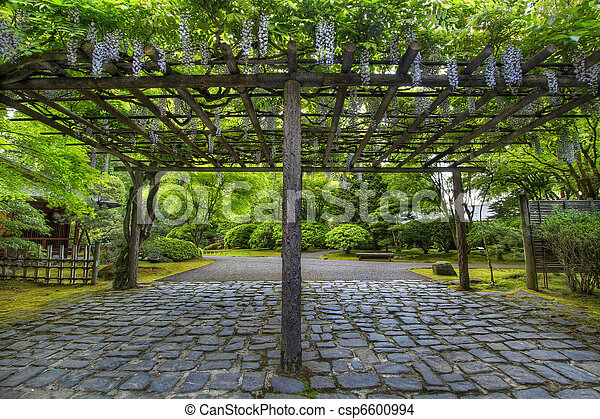 Wisteria in Bloom at Portland Japanese Garden Path - csp6600994