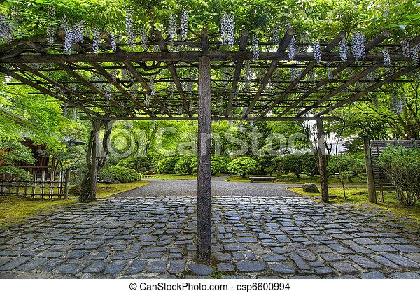 wisteria, japonais jardin, sentier, portland, fleur. wisteria