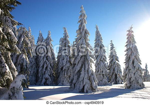 witn, raio sol, paisagem inverno - csp4940919