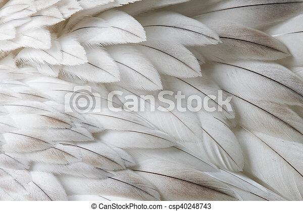 witte , closeup, veer, pluizig - csp40248743