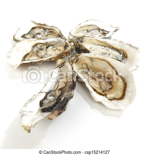 witte , oesters - csp15214127