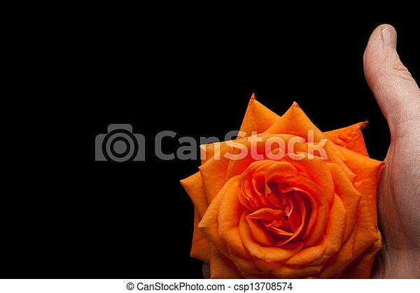 wizerunek, pomarańcza, do góry szczelnie, niezamężna podniosła się - csp13708574