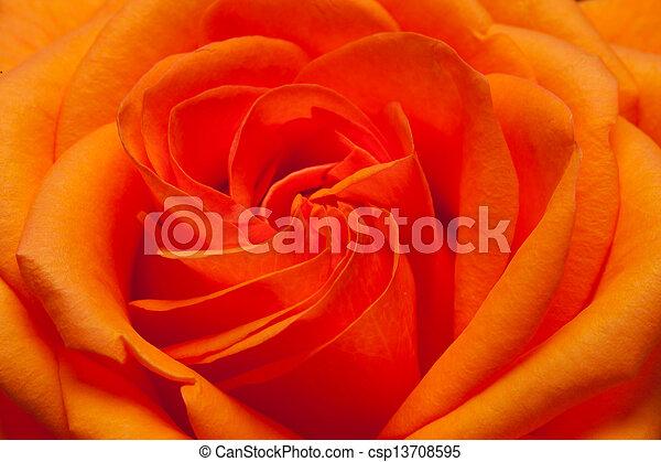 wizerunek, pomarańcza, do góry szczelnie, niezamężna podniosła się - csp13708595
