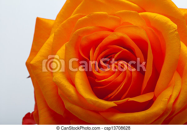 wizerunek, pomarańcza, do góry szczelnie, niezamężna podniosła się - csp13708628