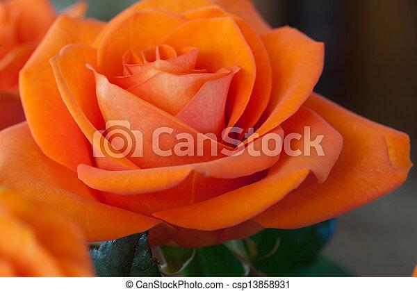 wizerunek, pomarańcza, do góry szczelnie, niezamężna podniosła się - csp13858931