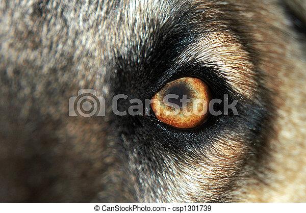 Wolf Eye - Normal - csp1301739