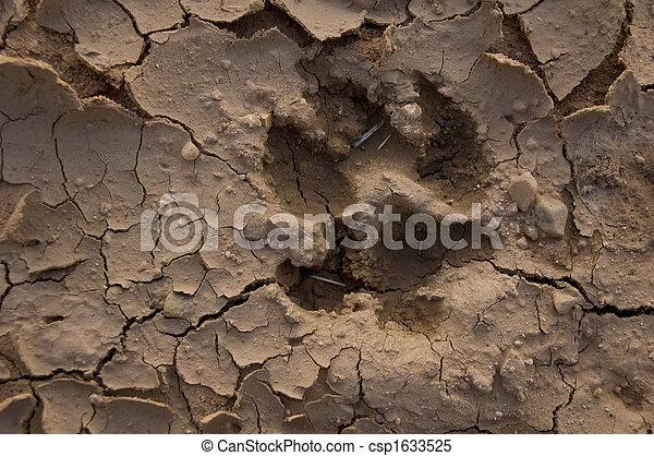 Wolf footprint - csp1633525