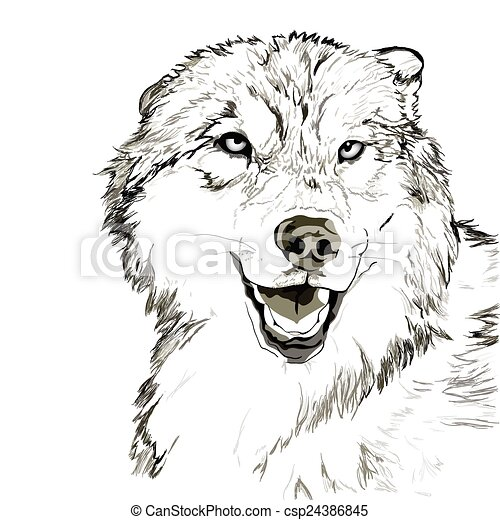 44767fefc Wolf muzzle sketch. Vector portrait of angry wolf face.