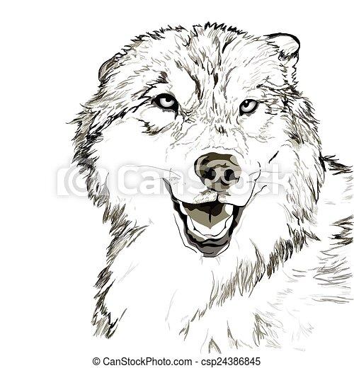 Wolf muzzle sketch - csp24386845