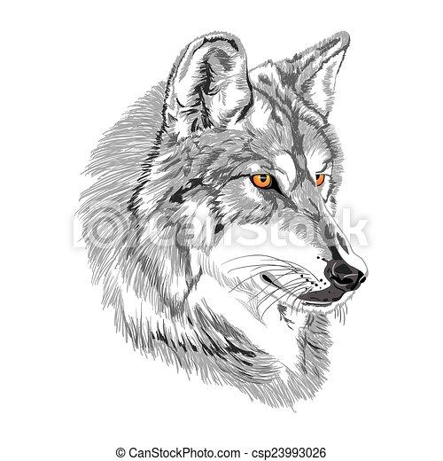 Wolf muzzle sketch - csp23993026