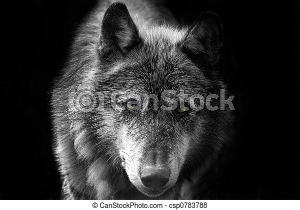 Wolf - csp0783788