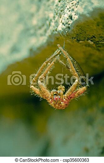 Wolf spider - csp35600363
