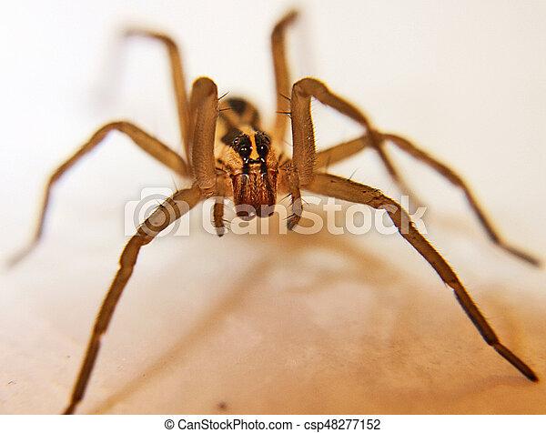 Wolf Spider - csp48277152