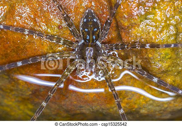 Wolf Spider - csp15325542