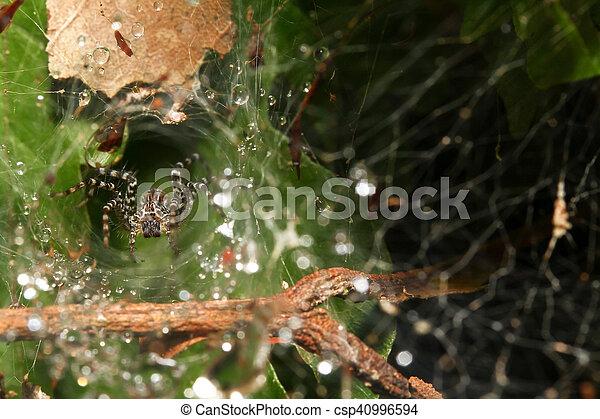 Wolf spider - csp40996594