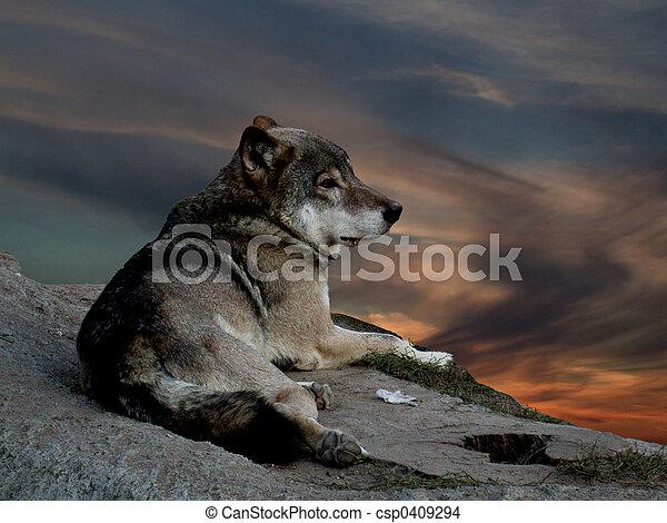 Wolf - csp0409294
