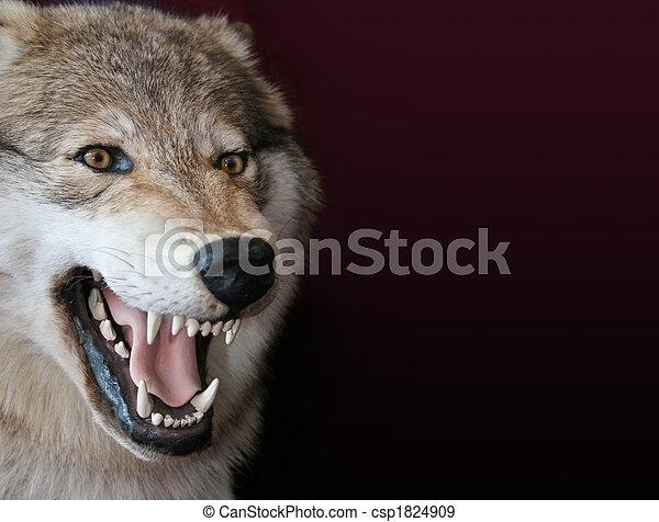 wolf - csp1824909