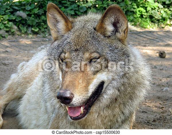 Wolf - csp15500630