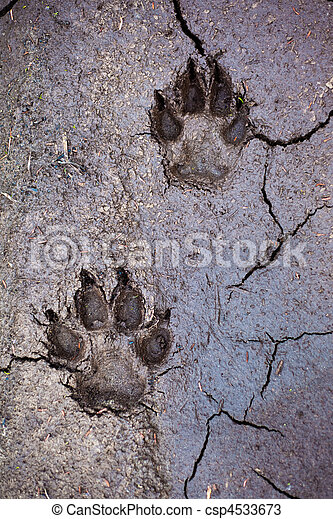 Wolf tracks - csp4533673