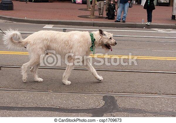 Wolfhound - csp1709673