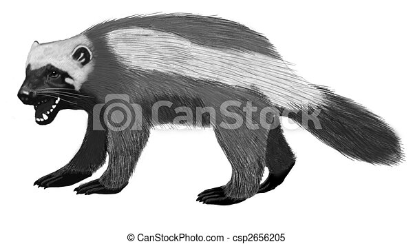 wolverine gulo gulo pencil and computer drawing rh canstockphoto com michigan wolverine clipart wolverine clipart png