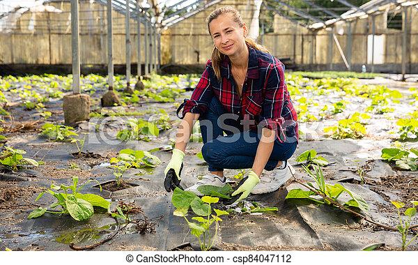 Woman checking squash seedlings - csp84047112