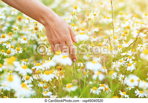 Woman hand touching white meadow flowers closeup sunny summer woman hand touching white meadow flowers closeup sunny summer background healthcare concept mightylinksfo