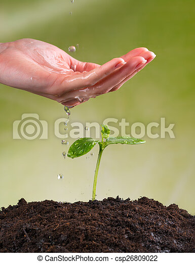 Woman hand watering young plant - csp26809022