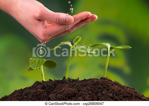 Woman hand watering young plants - csp26809047
