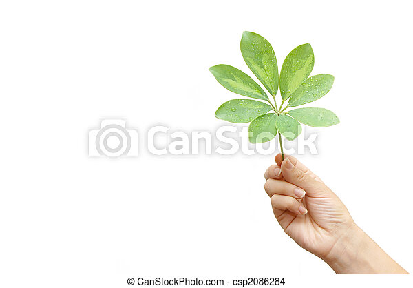 woman hand with leaves isolated - csp2086284