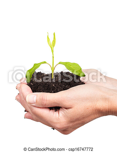 Woman hands with green plant. - csp16747772