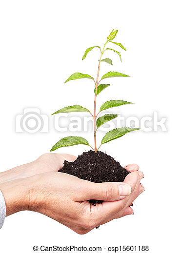 Woman hands with green plant. - csp15601188
