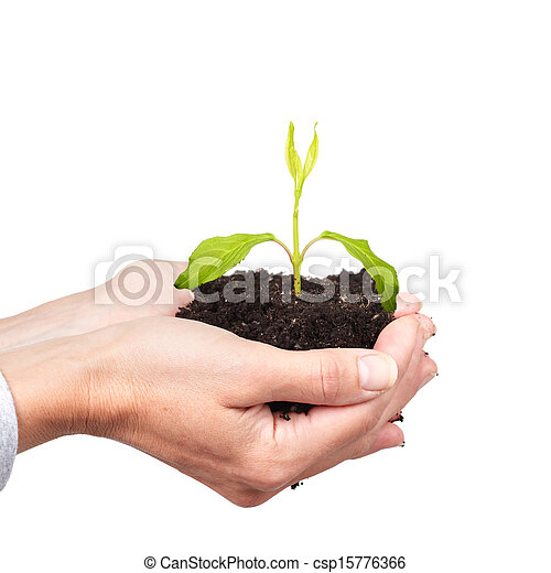 Woman hands with green plant. - csp15776366