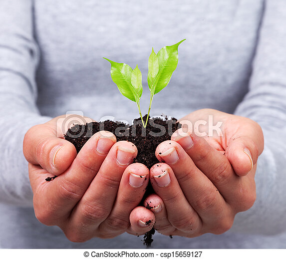 Woman hands with green plant. - csp15659127