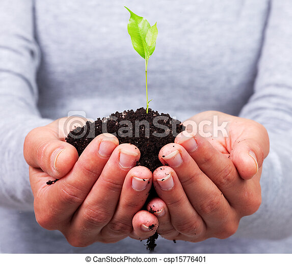 Woman hands with green plant. - csp15776401