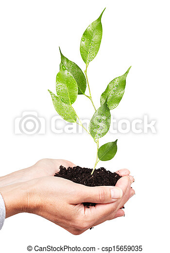 Woman hands with green plant. - csp15659035