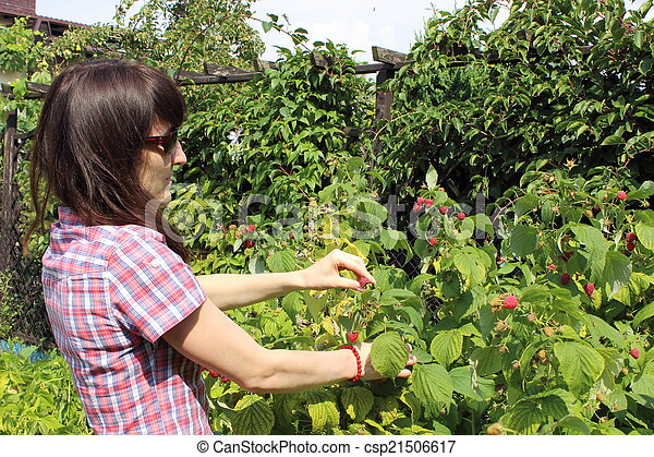 Woman reaps the fruits in sunny garden. Woman and natural ...