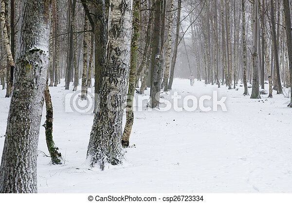 Woman with dog walking down the avenue in the winter. - csp26723334