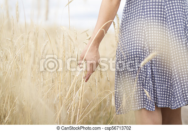 Woman's hand on the wheat field - csp56713702