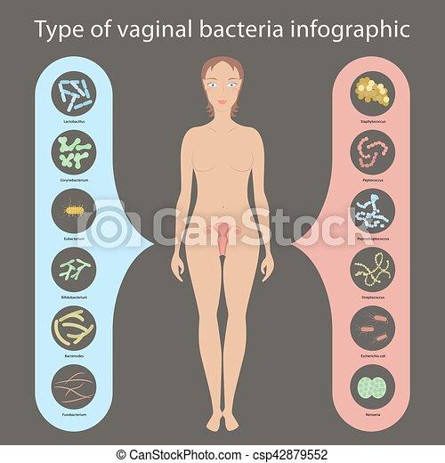 vaginal clip art